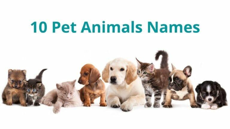 10 Pet Animals Names