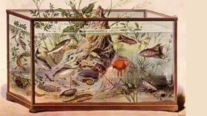 Aquarium Fish History