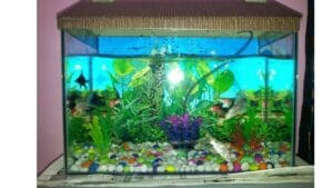 Pet Fish Types