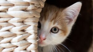 Behavioral problems | Cat Facts