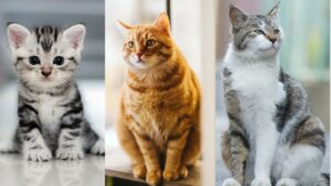 Color | Cat Facts