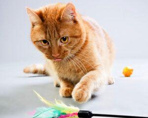 Cats Behaviour | Cat Facts