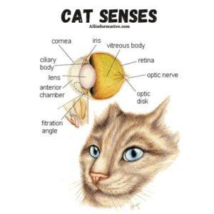 The Senses | Cat Facts