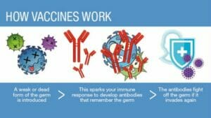 What are vaccines and how do they work?